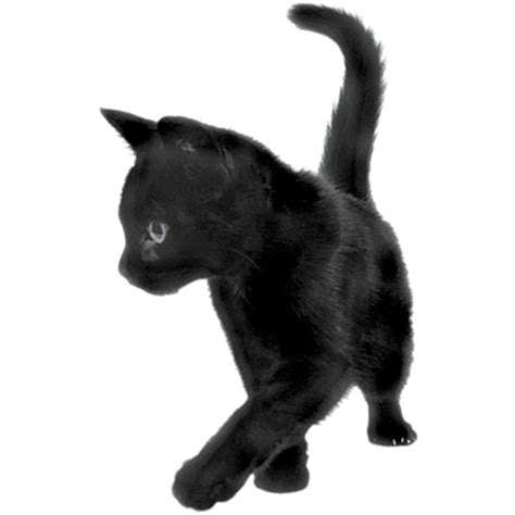 Piyama Black Cat black cat sideview transparent png stickpng
