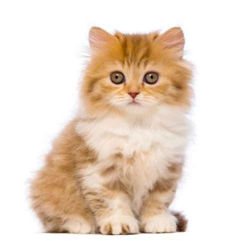 un gato y un 14 razones por las que tener un gato es mucho mejor que tener un novio o novia