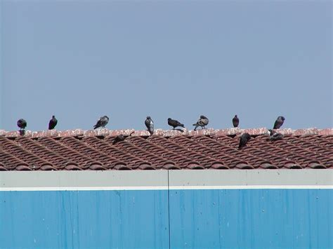 bird control for residential property