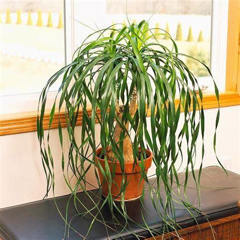 drought tolerant houseplants   kill plants