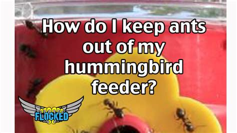 how to keep wasps out of hummingbird feeders how to keep