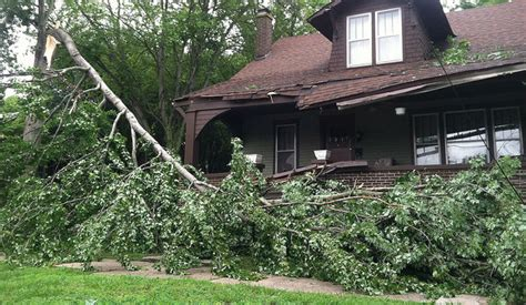 home insurance and fallen trees damage ratehub blog
