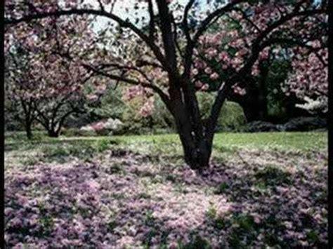 cherry tree b b blackpool francis cabrel la robe et l 233 chelle