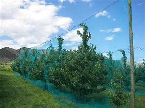 fruit tree netting smart net systems industrial
