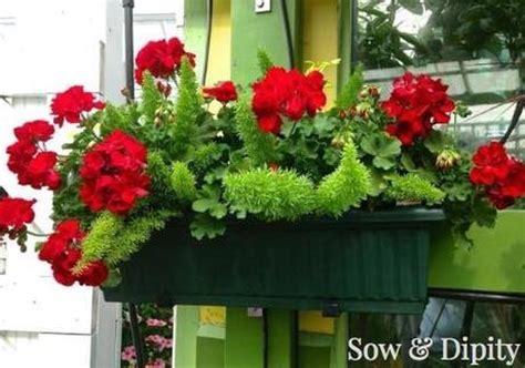 window planter box ideas 10 window box planter ideas paperblog