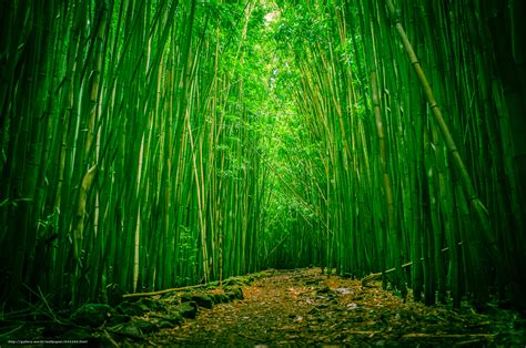 World Beautiful Places download wallpaper bamboo forest haleakala national park