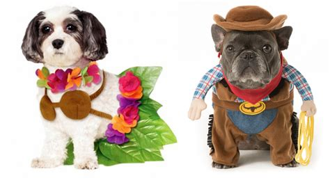 for dogs costume ideas 32 easy costumes for your canine today