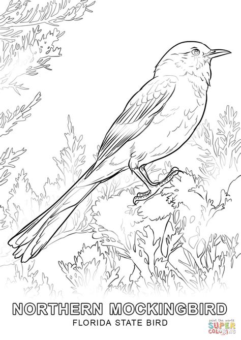 Coloring Page Of Florida State Bird | florida state bird coloring page free printable coloring
