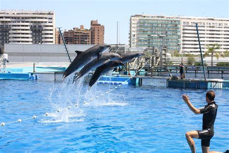 turisti per caso valencia delfinario all oceanografic viaggi vacanze e turismo
