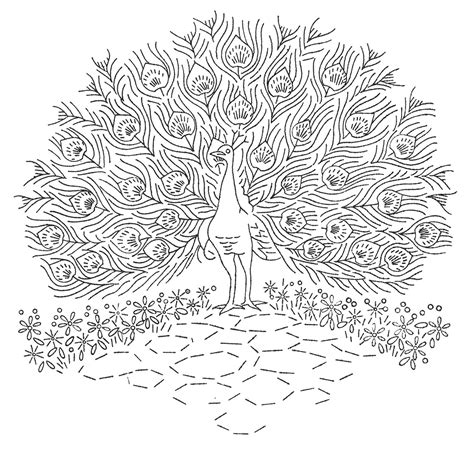 hard coloring pages of peacocks free hard peacock coloring pages