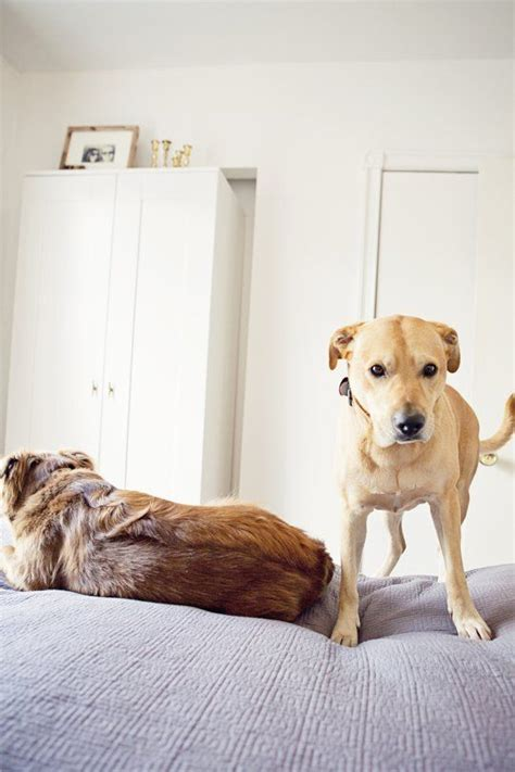 pattern games leslie mcdevitt 35 best dog training tips articles images on pinterest