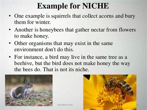 exle of niche ecosystem powerpoint 1
