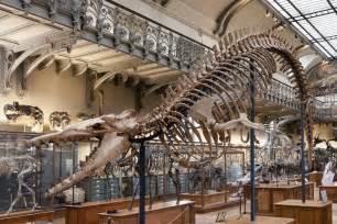 galerie de pal 233 ontologie et d anatomie compar 233 e mus 233 um