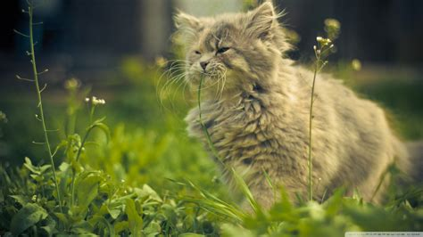 cat eating wallpaper download cat eating grass wallpaper 1920x1080 wallpoper