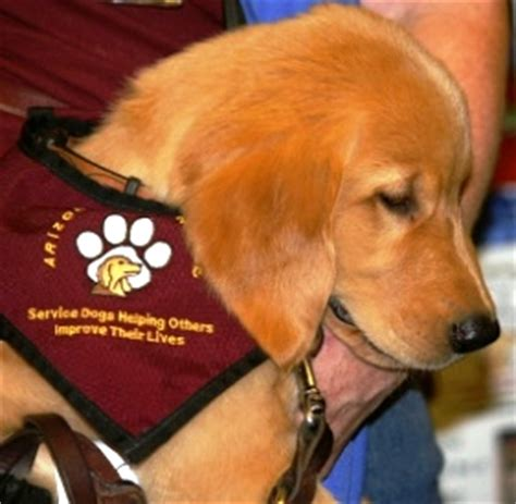 diabetes service dogs responsible pet ownership diabetic alert dogs help reclaim their independence