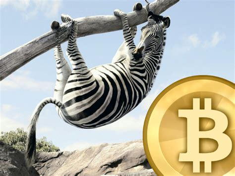 bitcoin zebra bitcoin zebra feed the zebra bitcoinist net