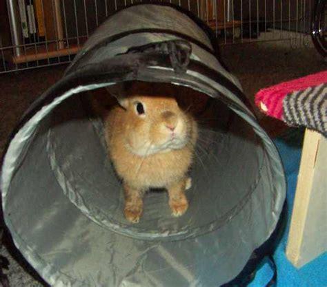 kaninchen haltung wohnung kaninchen info wohnungsgehege