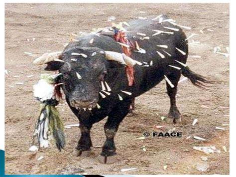 imagenes del animal weta im 225 genes del maltrato animal