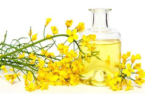 olio di colza alimentare olio di colza propriet 224 e uso alimentare cure naturali it