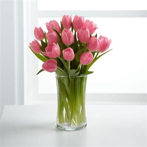 tulipani in vaso fioritura tulipani olanda bulbi fioritura tulipani olanda