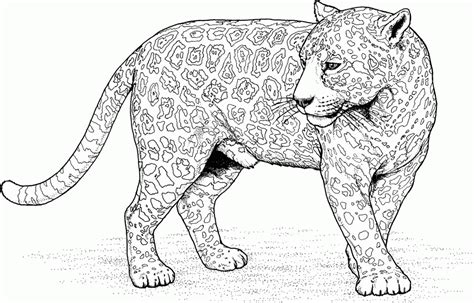 coloring pages of wild cats caracal coloring page coloring home