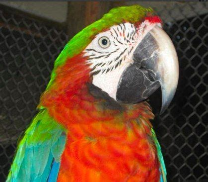 rescued birds ohio pin by florida parrot rescue m a r s on macaws