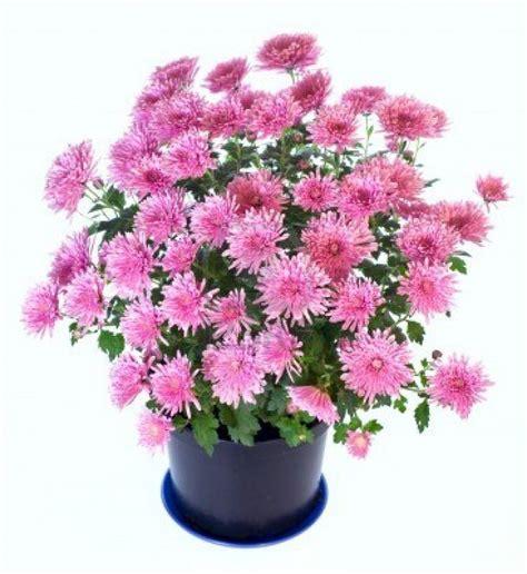 piante da giardino fiorite piante da giardino fiorite fotogallery donnaclick