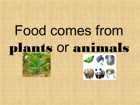 food comes from plants or animals