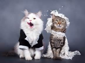 Top 10 Best Images of Cats Getting Married Bestofcats