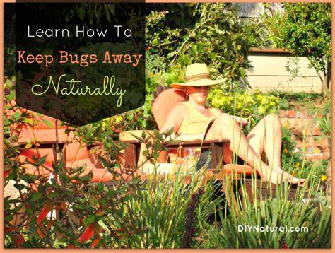 how to keep flies away from backyard more homemade insect repellent ideas