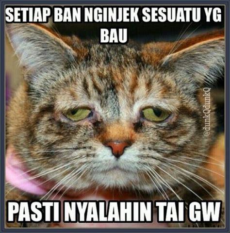 Meme Kucing - tai kucing gambar kata kata lucu pinterest