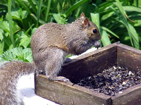squirrel baffles for bird feeders bird cages