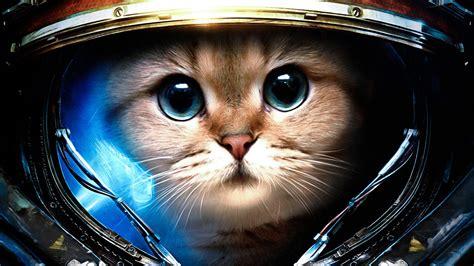cat wallpaper imgur space cat 1920x1080 imgur