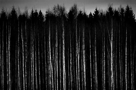 white black forest black and white pictures anime forest 1 desktop background