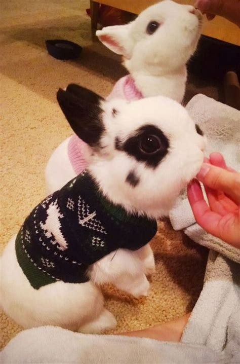 Animal Pullover 20 of the cutest baby animal wearing tiny sweaters