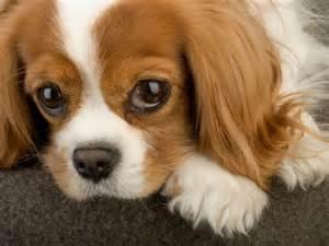 hypoallergenic puppies for sale in cincinnati dog breeds picture