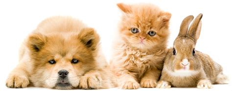 the about cats and dogs foster