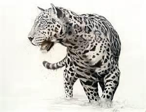 Drawings Of Jaguars Jaguar Flickr Photo
