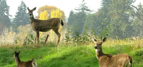 best time to feed now s the best time to use a deer feeder banks outdoors
