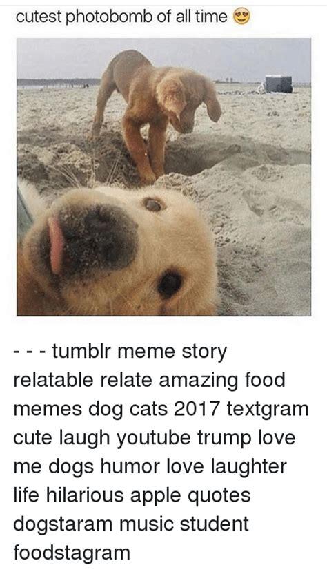 Tumblr Meme Quotes - cutest photobomb of all time tumblr meme story