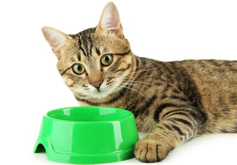 best food brands 2017 best cat food brands the happy cat site