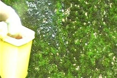 pvc boden geruch entfernen moos an der hauswand entfernen anleitung f 252 r