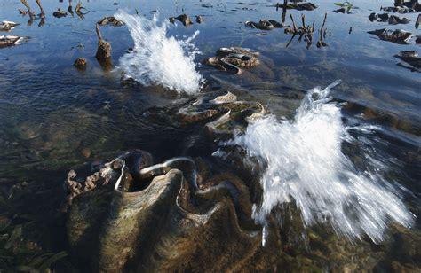 The Giant Clam A.K.A. Tridacna Gigas