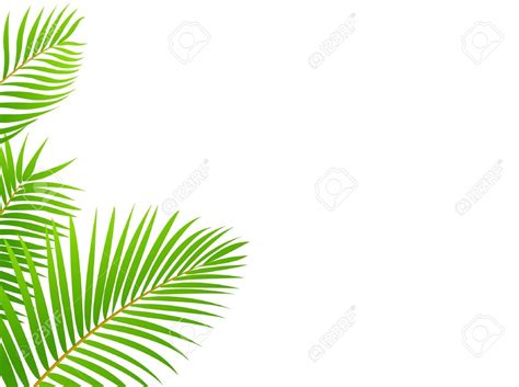 palm tree leaf clipart clipartxtras
