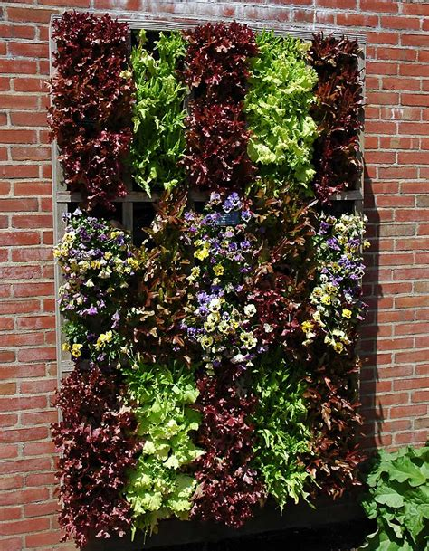 vertical garden vegetables vertical gardening ideas vegetables photograph growing up