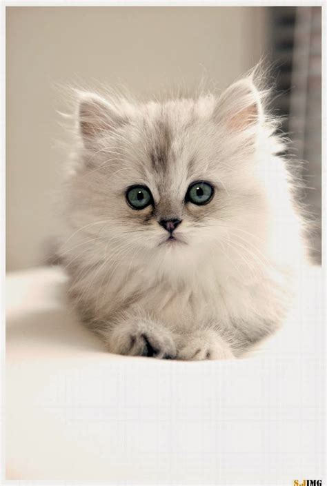 nicest breeds pet s we may 2015