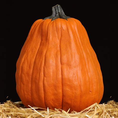 artificial pumpkins masterpiece pumpkins kins artificial carvable pumpkins