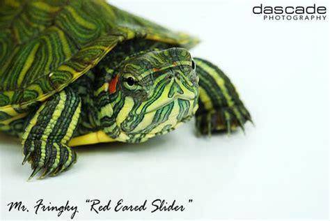 Lu Uvb Untuk Reptil luqman reptile kura kura air tawar