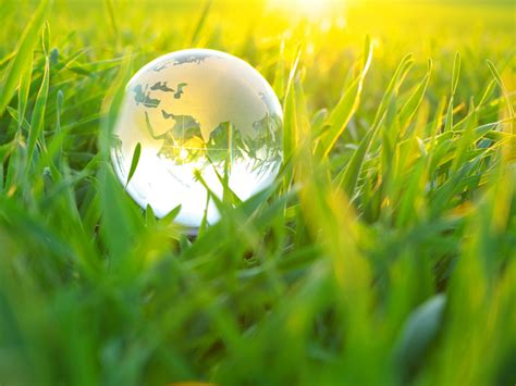 Mba In Sustainability And Environmental Compliance by Bachelor S Degree In Environmental Science Environmental