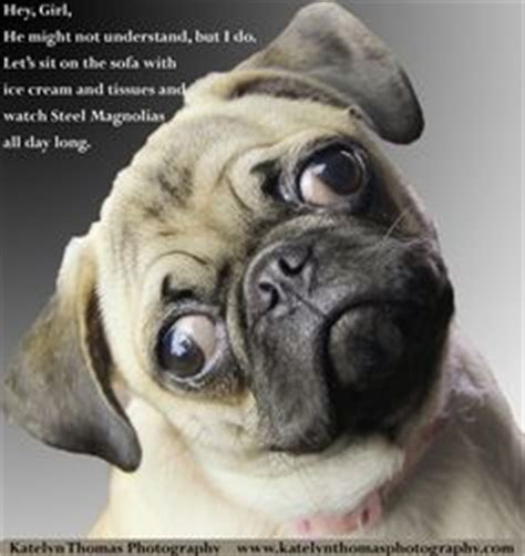 Pug Birthday Meme - intellectual pug meme memes